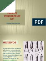 Dientes Temporarios (20)