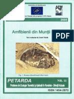 Petarda - 11