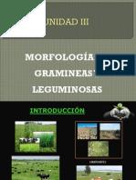 Morfologia de Gramineas y Leguminosas