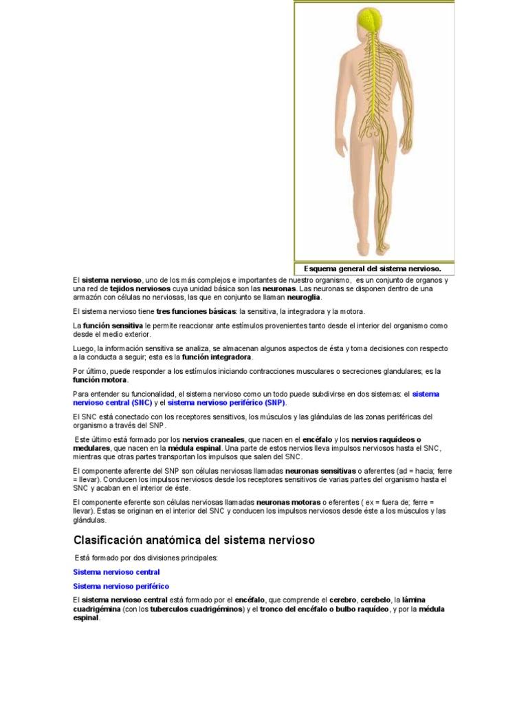 Único Anatomía Y Fisiología Stanley E Gunstream Molde - Imágenes de ...