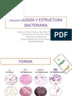 2. MORFOLOGÍA Y ESTRUCTURA BACTERIANA I estudiantes.pdf