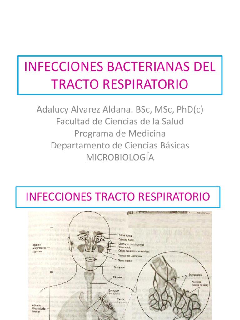 sistema respiratorio superior pdf