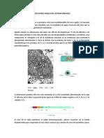 INFECCIONES VIRALES DEL SISTEMA NERVIOSO.pdf