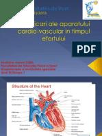 Adaptarea aparatului cardiovasculcar in timpul efortului