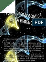 teoria_cromosomica