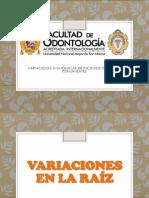 variaciones anatomicas de incisivos inferiores.pptx