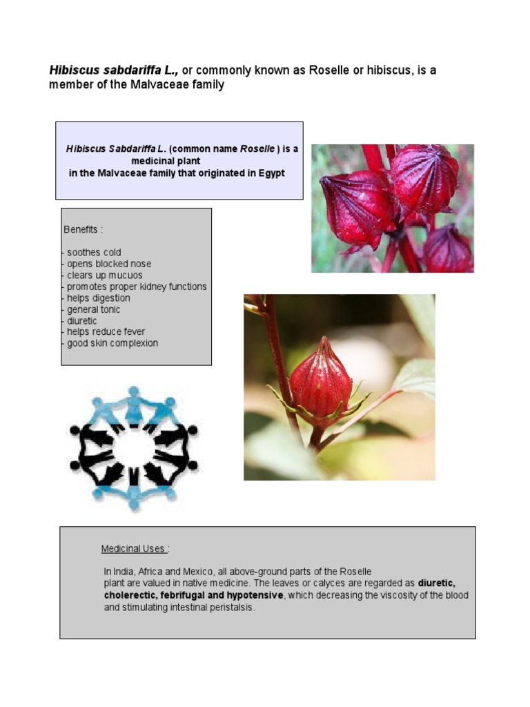 Hot pickroselle juice antioxidant blood izmirmasajfo