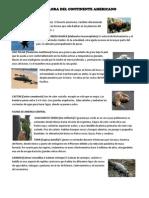 Fauna y Flora Del Continentes