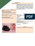 21 Vaginosis bacteriana