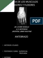 Anatomia de Los Tendones Extensores