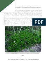 Eduart Zimer - (SDU) - Trichomanes reniforme (2010)