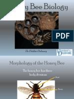 The HoneyBee Biology