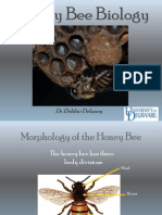 The HoneyBee Biology