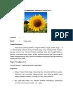 Fitoterapi_Bunga Matahari & Padi