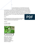 Deskripsi wedelia trilobata