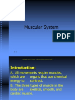 20111019121020lecture 5_ Muscular System