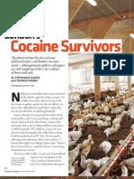 Cocaine Survivors