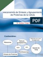 Tema 3 Sintesis de Proteinas