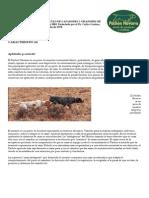 patron_b.pdf