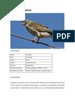 Catalogo de Aves Pascacio
