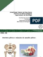 Aulax Pelveemusculodoassoalhopelvico 100503174232 Phpapp02