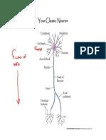 3+Neurons+and+Signaling+4-10