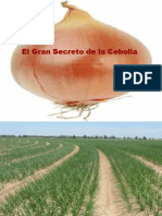 El Gran Secreto de La Cebolla