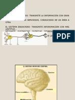 Clases Del Sistema Nervioso y Sus Divisiones