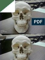 Cranial Bones 0812