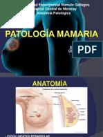 anatomiapatologicademamas-130720213450-phpapp02