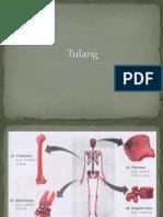 Tulang.pptx