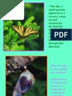 Butterfly Story