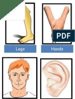 Flashcards Body