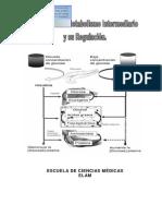 Ejercicios de Metabolismo e Intercambio Celular