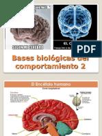 Bases biológicas 2