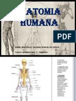 Slides de Anatomia
