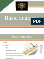 Basic Neuroanatomy ppt slides