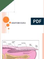 Anatomi Kuku