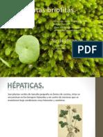 CLASIFICACIÓN PLANTAS