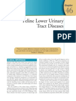 Chapter 46 - Feline Lower Urinary Tract Disease