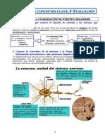 Sistema Nervioso Apuntes