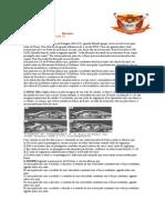 Leis de Newton Unidade 13 Exercicios762011205725