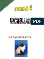RAZAS+DE+GATOS