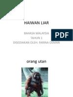 HAIWAN LIAR - Tugasan en Zol