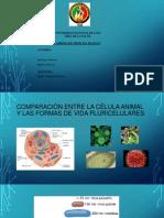 Biologia Molecular Expo