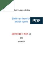 118 06 Schel.appendicolare