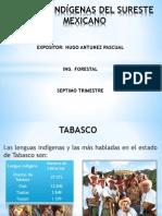 GRUPOS INDÍGENAS DEL SURESTE MEXICANO.pptx