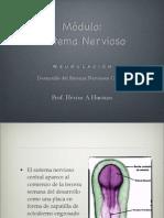 (11) Neurulacion