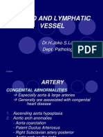 CVS2 - K35 - K53 - Blood & Lymphatic Vessel PA