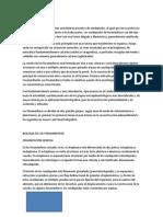 Catalogo FORAMINIFEROS (Autoguardado)